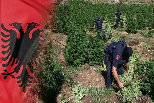 albania cannabis flag