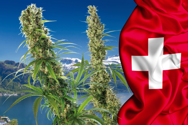 switzerland cannabis3