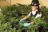 uk cannabis plantation police2